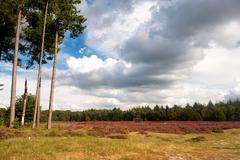 Stock Photo of heather landscape