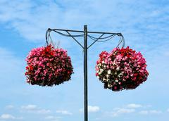 Two hanging baskets of bergonias with blue sky and white clouds Stock Photos