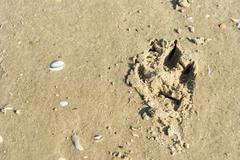 dog foot print - stock photo