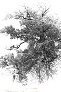 black and white pagoda art - stock photo