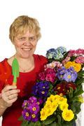 elderly woman is gardening - stock photo