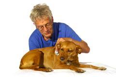 Veterinair with dog Stock Photos