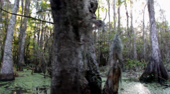 Stock Video Footage of Swamp and Bayou