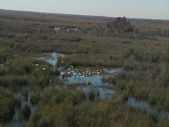 Aerial Florida marshland 03 - stock footage