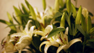 Stock Video Footage of a bouquet of lilies. flowers awake. Time Lapse