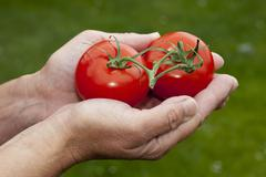 Stock Photo of Hands with tomatoes