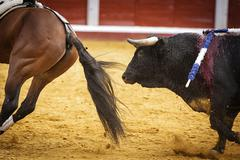 brave bull chasing horse during a bullfight, spain - stock photo