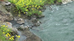 Bubbling hot spring and creek Stock Footage