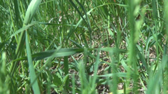 POV, point of view walking running follows passing grass pasture meadow animal  Stock Footage