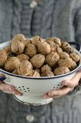 Hands holding colander with walnuts, close-up Stock Photos