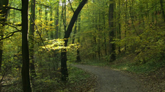 Stock Video Footage of Curvy autumn forest trail