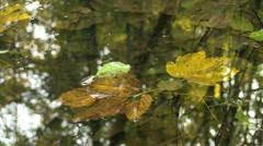 Autumn fallen leaves in still water - stock footage