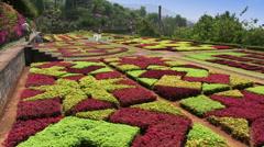 Madeira, Botanic Garden, Funchal, Portugal Stock Footage