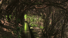Laurel forest and irrigation canal, Levada das 25 Fontes, Madeira, Portugal - stock footage