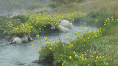 Hot spring creek with flowers, 10 Stock Footage