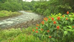 Orange Flowers and stream Stock Footage