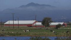 Idyllic farm with cows and red barn Stock Footage