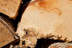 Wood texture of cut tree trunks, close-up Stock Photos