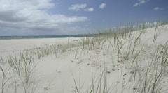 Beach grass Stock Footage