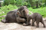 Stock Photo of Thai elephant mom and baby