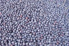 Set of blue berries and blueberries for sale at the market Stock Photos