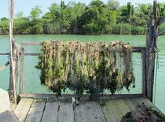Stock Photo of fishing nets used to catch the fish put forth to dry in the sun