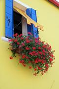 red flowers geraniums on the yellow house on the island of burano - stock photo