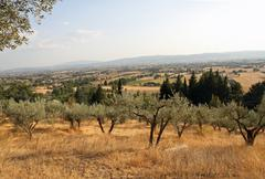 olives of san damiano and the plain of assisi - stock photo