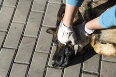 cruelty to dog - stock photo
