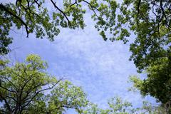 Sky and tops of the trees Stock Photos