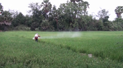 Worker sprays insecticide on a rice field - Worker walks down the field spraying Stock Footage