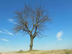 bare tree isolated on the hill - stock photo