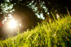 background of unreal black sky with sun and grass - stock photo