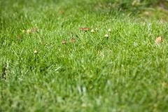 toadstool on green grass - stock photo