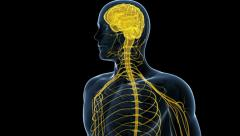 The human nerve system Stock Footage