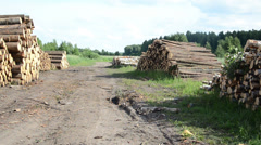 Panorama of wood fuel birch and pine logs stacks near forest Stock Footage