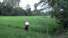 Worker sprays insecticide on a rice field - Worker spraying nearby Stock Footage