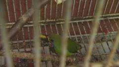 Tropical Bird in Cage, Toucan Stock Footage
