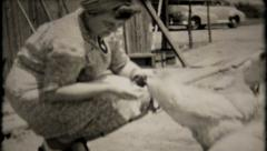 649 - woman feeds the chickens out of her hand - vintage film home movie Stock Footage