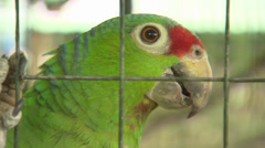 Green Parrot In Cage Stock Footage