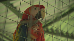 Red Parrot in Rescue Cage Stock Footage