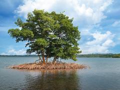 Mangrove islet in the archipelago of Bocas del Toro Stock Photos