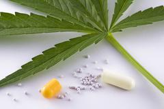 Concept of alternative medicine, leaf marijuana and contents of capsule open Stock Photos
