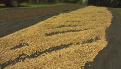 Coffee Beans, Seeds Laid Out Stock Footage
