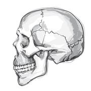 Hand drawn human skull Stock Illustration