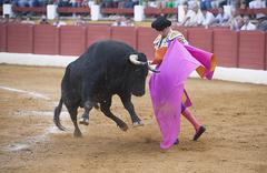 the spanish bullfighter jose maria manzanares bullfighting with the crutch  - stock photo
