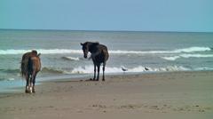 Two wild horses walk sea shore Stock Footage