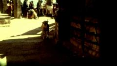 Goat Nepal Kathmandu religion symbol poverty vintage historic outdoors Stock Footage