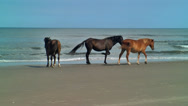 Stock Video Footage of wild horse herd standing by the sea