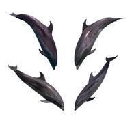 Dolphin collection Stock Photos